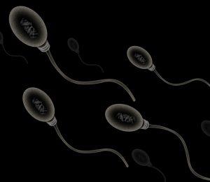 régime alimentaire pour la fertilité masculine
